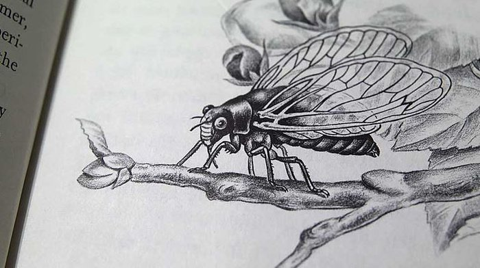 Musical_insects_3